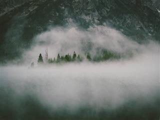 mist over a forest