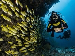 scuba diving  in Maldives next to  a  school of fish