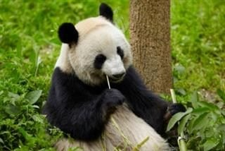 How Marketers Can Brace for Google Panda 40 Update