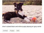 descriptive metadata about a puppy