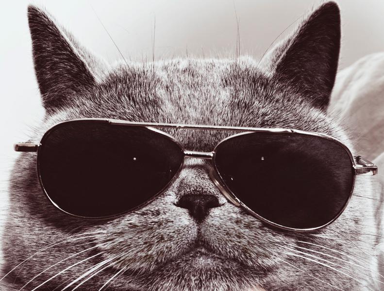 пафосные коты в очках камера