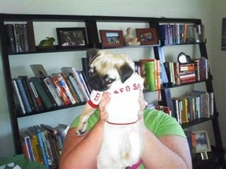 Woman holds up a dog with a Red Sox baseball jersey on.