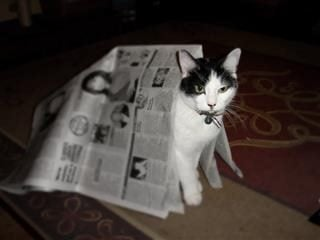 cat reading the news