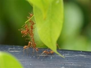 ants work together to get things done