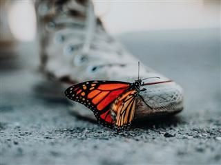 close up of butterfly on a dirty converse sneaker