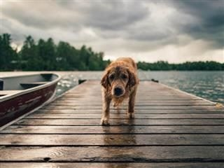 wet pup standing on a  pier