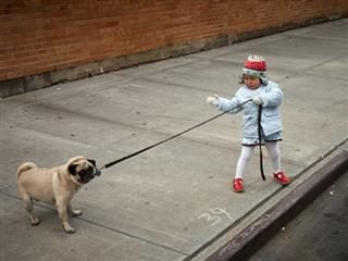 girl walking a stubborn dog on a leash