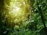 A lush jungle scene from a tropical rain forest