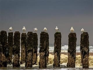 seagulls lined up