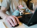 pup in a lap as the person works on a laptop