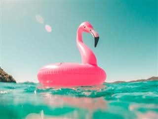 pink flamingo float resting on water