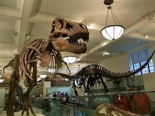 dinosaurs at the Museum of Natural History