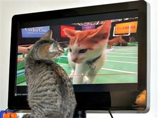 cat watching cat on tv