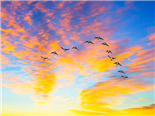 A flock of ducks migrating south over a setting sun