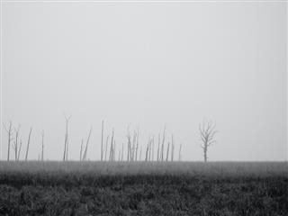 scene from a desert with a row of barren trees