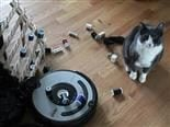 roomba, pile up of spools of thread and cat