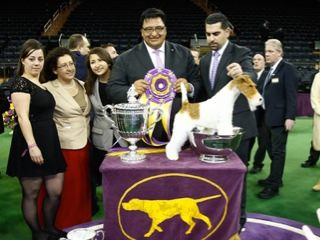 Tales of Westminster: Winning with Brand Excellence