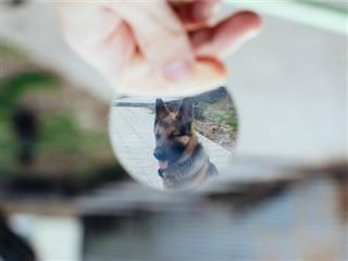 happy dog through a magnifying glass