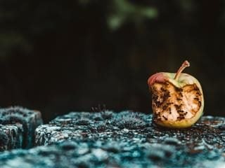 rotten apple with ants eating it (all it takes is one bad apple ...)