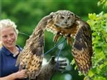 owl release