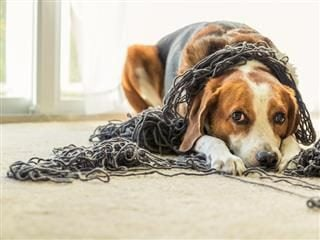 dog tangled up in yarn