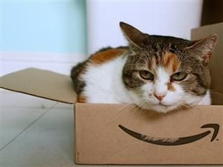 nonplussed cat sitting in an Amazon box