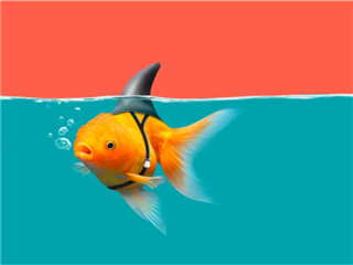 A goldfish with a fake shark fin attached to its back, swimming in blue water with orange background - Fake web analytics concept