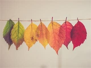 fall leaves on a clothesline