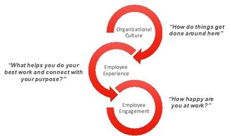 organizational culture, employee experience, employee engagement