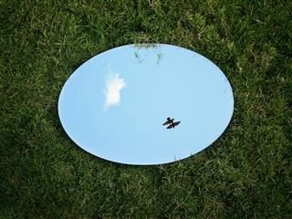mirror  in grass  reflecting a  bird  flying in the sky