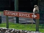 customer service sign with monkey on top