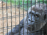 Free the Web From Google, Cage the IT Gorillas #OWF14