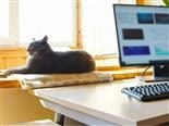 home office setting with computer in foreground and cat in background on windowsill