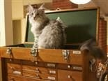 Cat in a toolbox