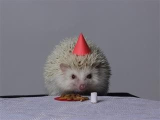 hedgehog with a party hat on, with cookies and a glass in front of it