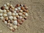 heart made of shells in the sand