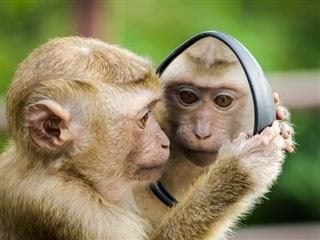monkey looking at itself in the mirror