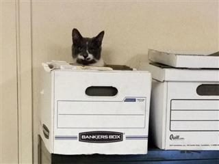 who filed the cat