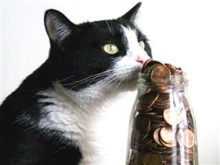 cat smelling a jar of coins