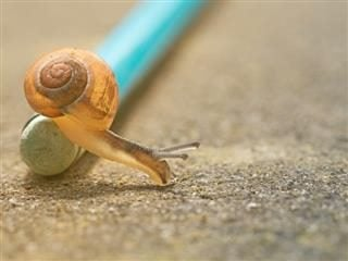 snail moving off of a blue stick