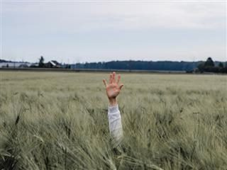 hand raised in the middle of a wheat field