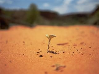seedling in the desert
