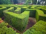 A garden maze in an outdoor park - marketing strategy concept