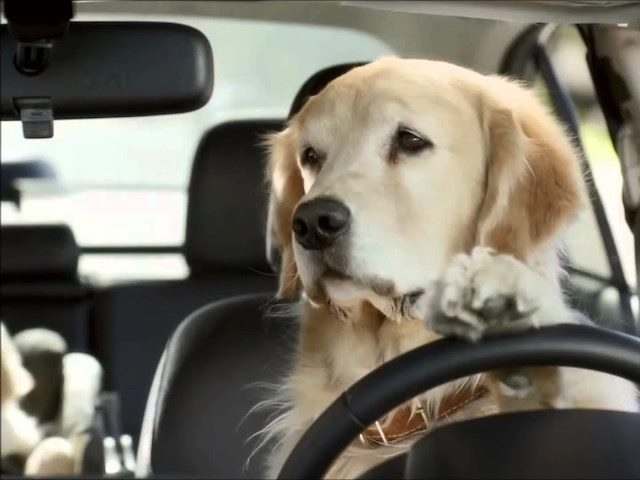 an example of a brand mascot: a golden retriever Barkley dog behind the wheel of a Subaru