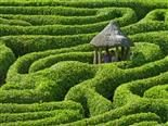 two people in the middle of a green maze made of shrubbery