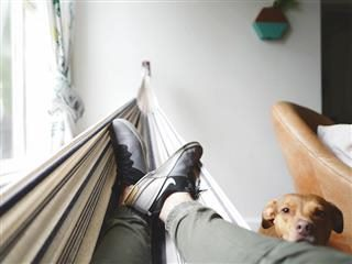 laying in a hammock while a dog stares at you