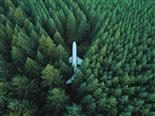 plane hidden in the middle of a forest