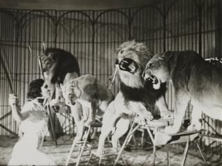 A lion tamer working with several lions - black and white