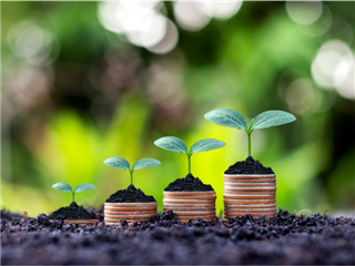 Plants growing on top of a pile of quarters in an outdoor wooded background investment concept