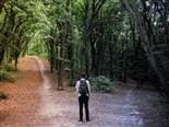 man standing in front of two paths diverging in the woods